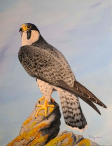 Peregrine Falcon A Painting by Stephen Koury