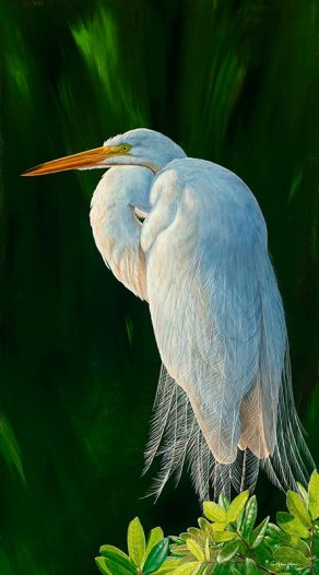 Great Light, Great Egret I