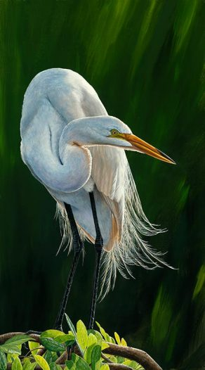 Great Light, Great Egret II