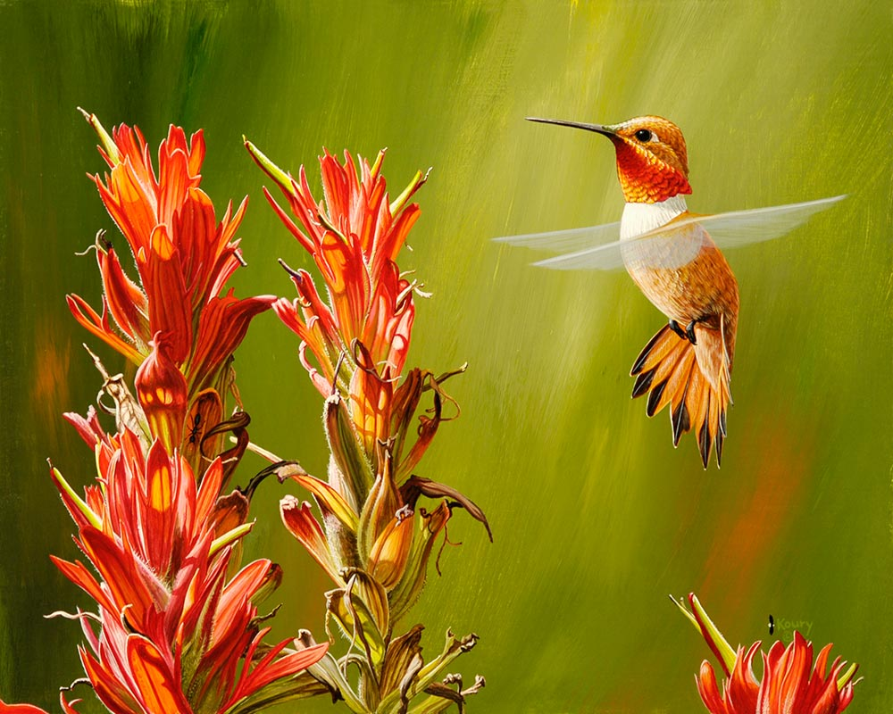 Rufous at Paintbrush