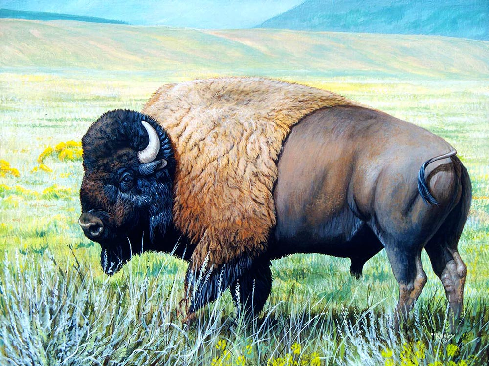 Monarch Bison