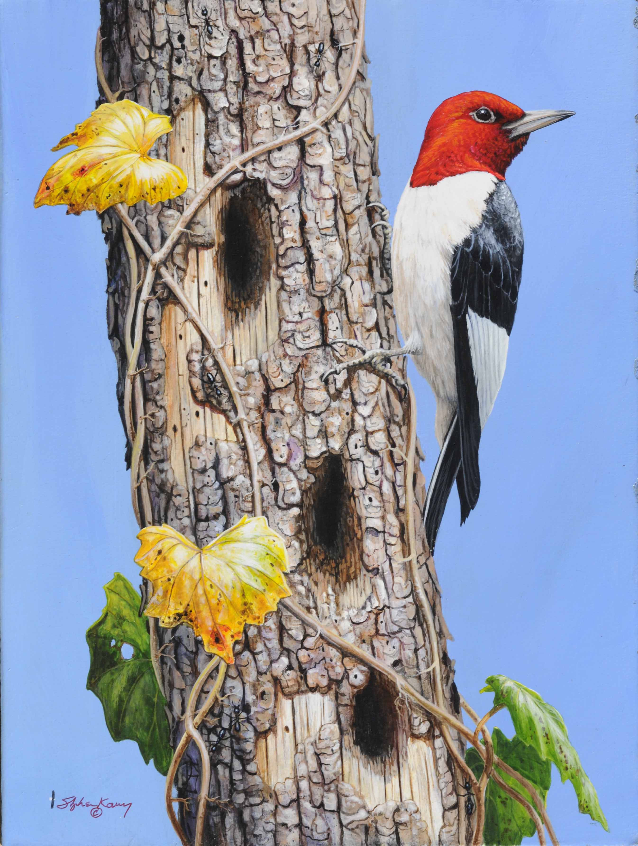 Red Headed Woodpecker 2016