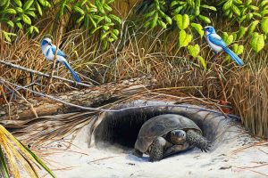 Gopher Tortoise 24x36 a small